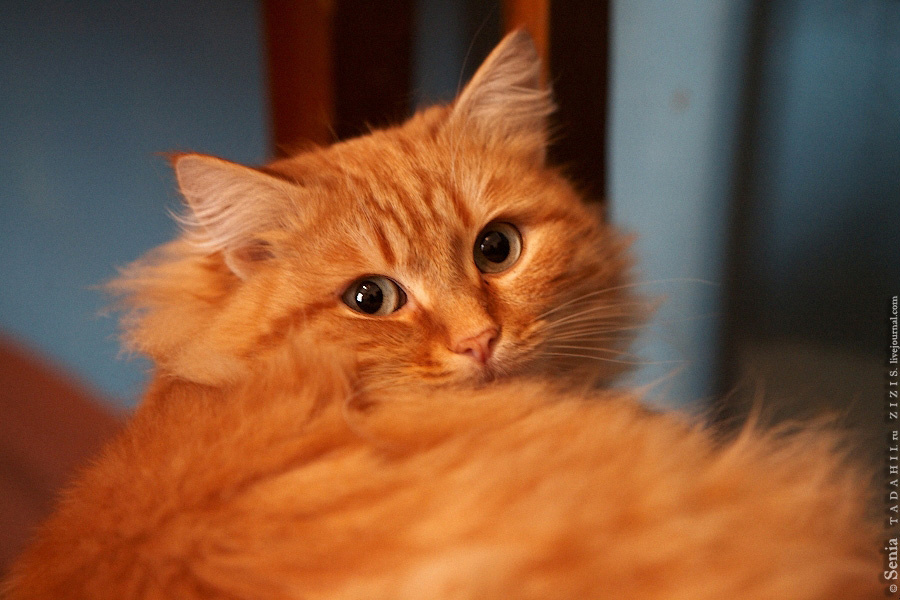 Мне почти подарили этого красавца, лишь бы забрал. Хотите помочь котику?