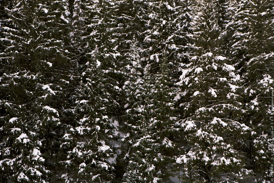 А вокруг елки и елки, а е