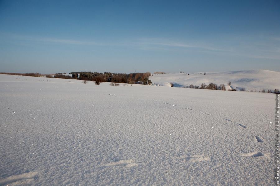 Были обнаружены следы лисы, стащившей из нашего лагеря индейку. Там же недалеко видели зайца беляка. А летом еще и кабанчики бегали.