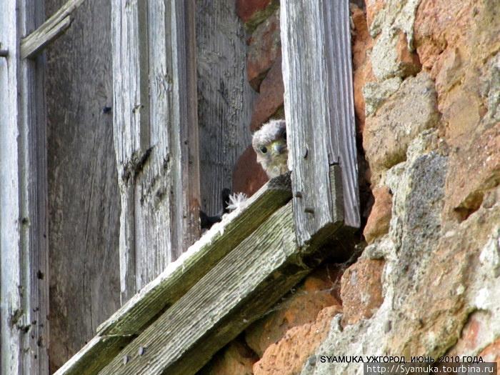 Птенец в нише окна в Замке.