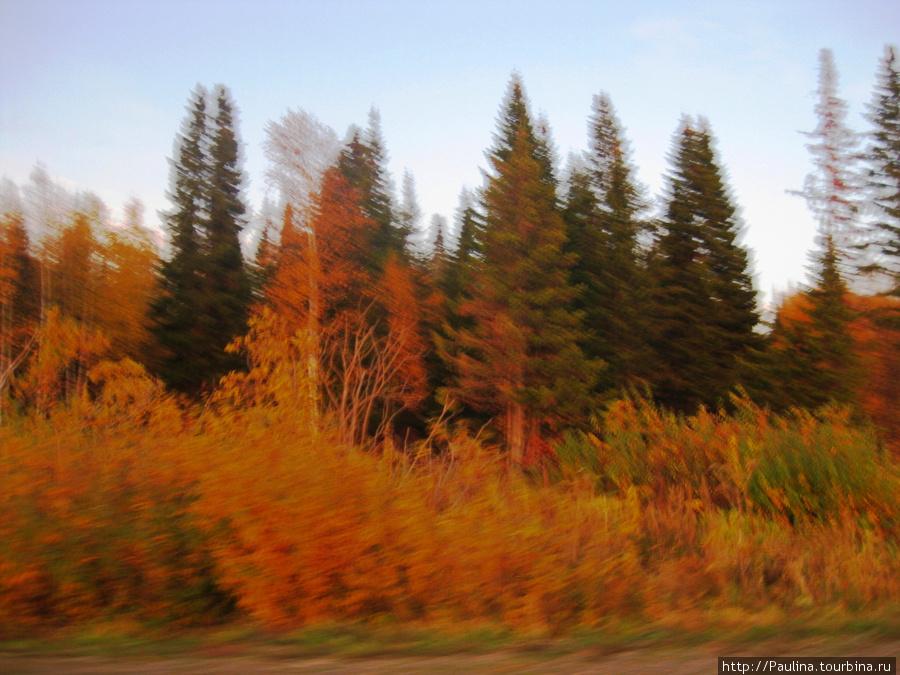 Осень в пригороде Томска... Дорога на с.Коларово, Батурино, Ярское