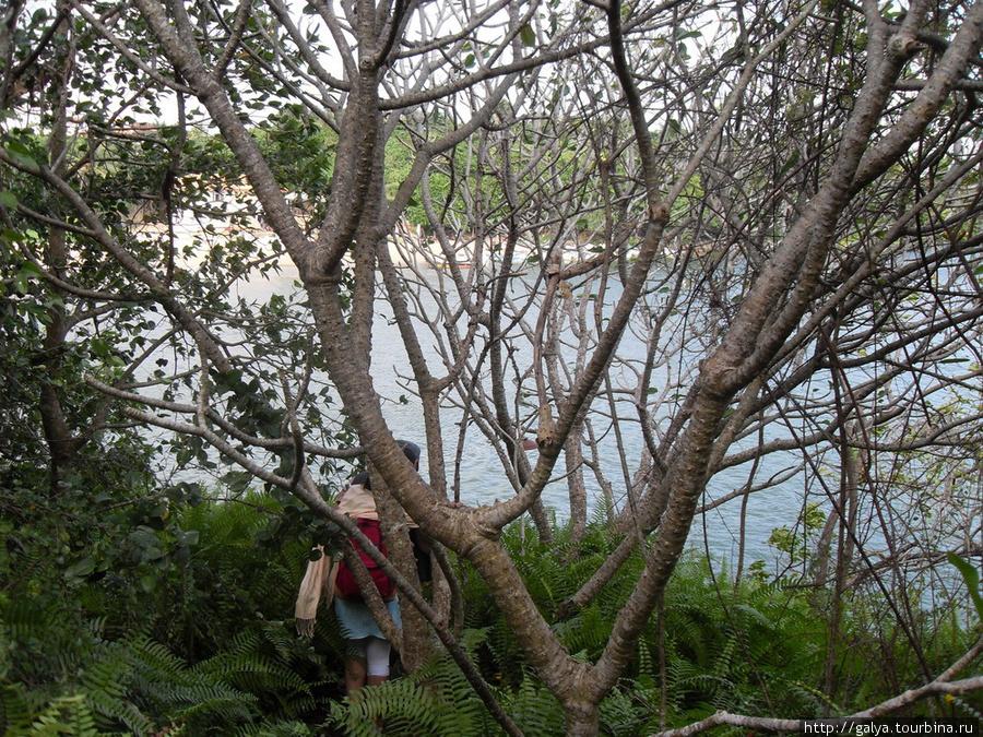 Река Бентота со скалы