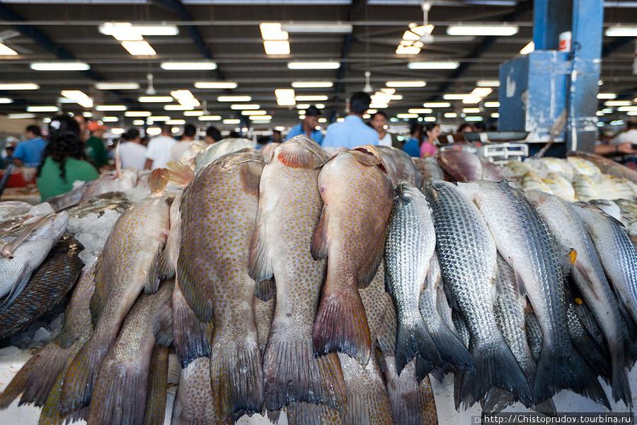 рыболовные рынки в алматы
