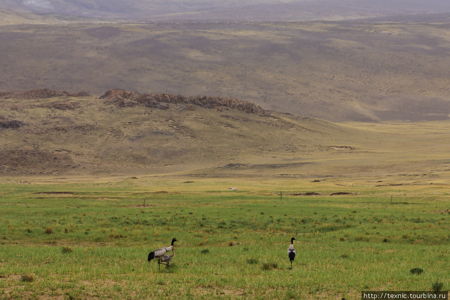 «Где бы я ни жил, я всегда буду скучать по Тибету. Мне часто кажется, что я и сейчас слышу крики диких гусей и журавлей и шум их крыльев, когда они пролетают над Лхасой в чистом и холодном лунном свете. Я искренне хочу, чтобы мой рассказ вызвал немного понимания людей, чьё желание жить в мире и свободными получило так мало симпатии в безразличном мире.»  Я мог бы продолжить ряд фотографий, которые мне вспомнились после прочтения книги... Но их все вы уже можете найти в моих альбомах. Просто к ним нет тех подписей, которые я сделал бы сейчас. Возможно, после своей следующей поездки в Тибет, я сделаю подборку фотографий, какие именно пейзажи мог видеть Генрих Харрер с цитатами из его книги.