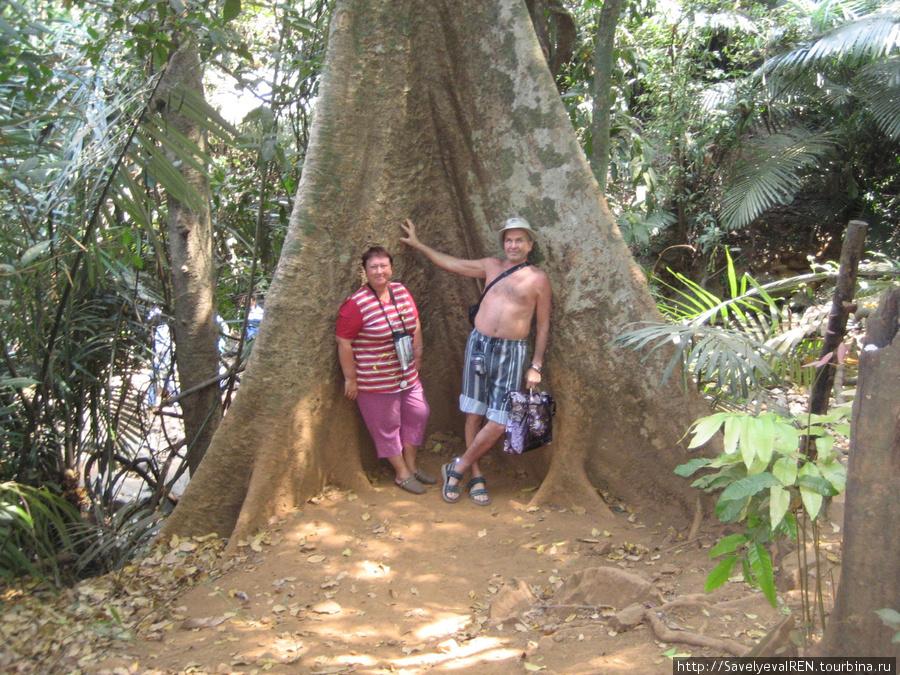 Вот это дерево!!!