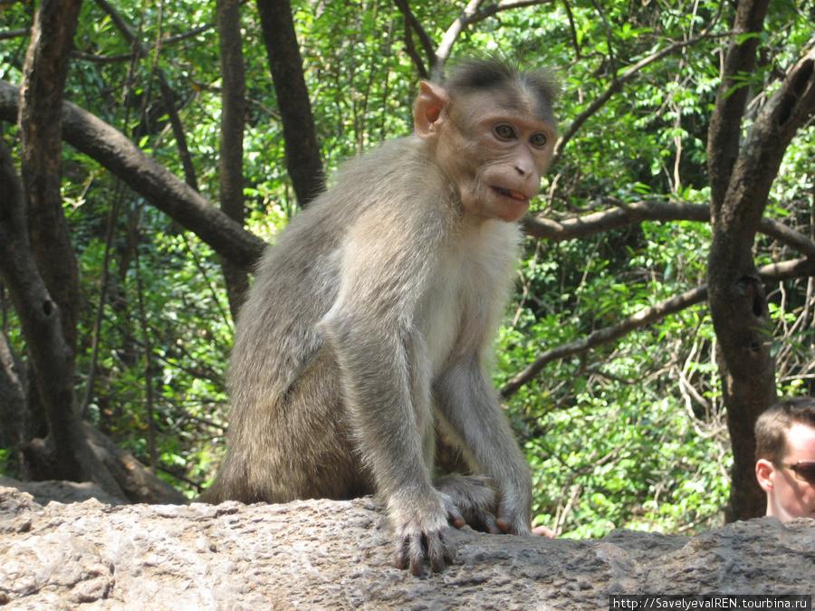 Дикие обезьянки ждут угощений, встречают людей, не боятся брать фрукты из рук.
