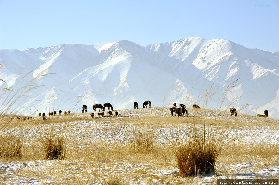 Пасущиеся стада неподалеку от Унгуртаса.