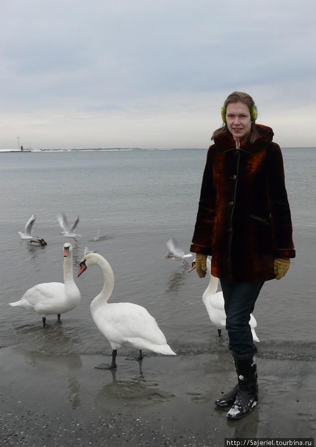 Море в Таллинне