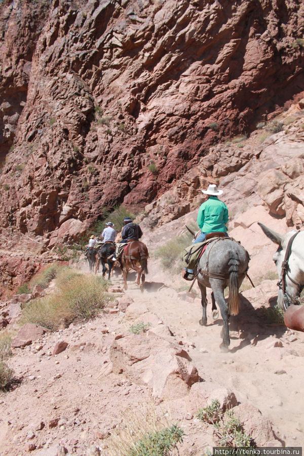 Для тех, кто не хочет или не может лично спуститься вниз Каньона, предусмотрены такие вот недешевые туры на мулах.