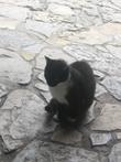 замковый кот