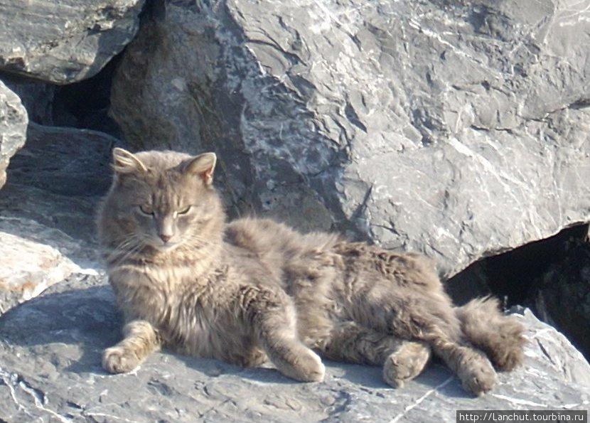 Настоящий стамбульский кот