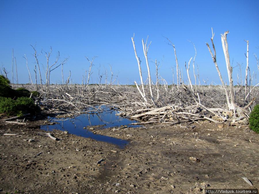 Этот лес во время урагана