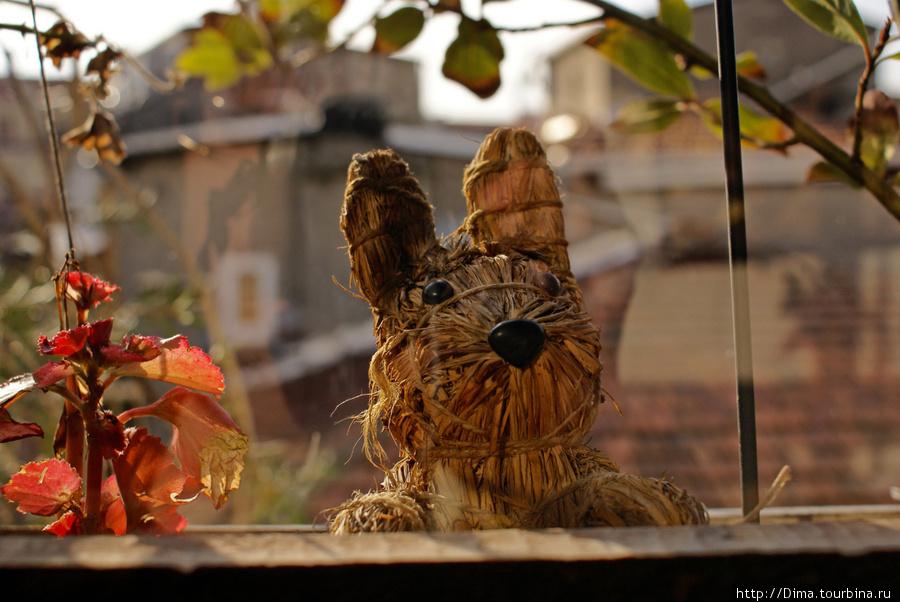 Зайчик за окном.