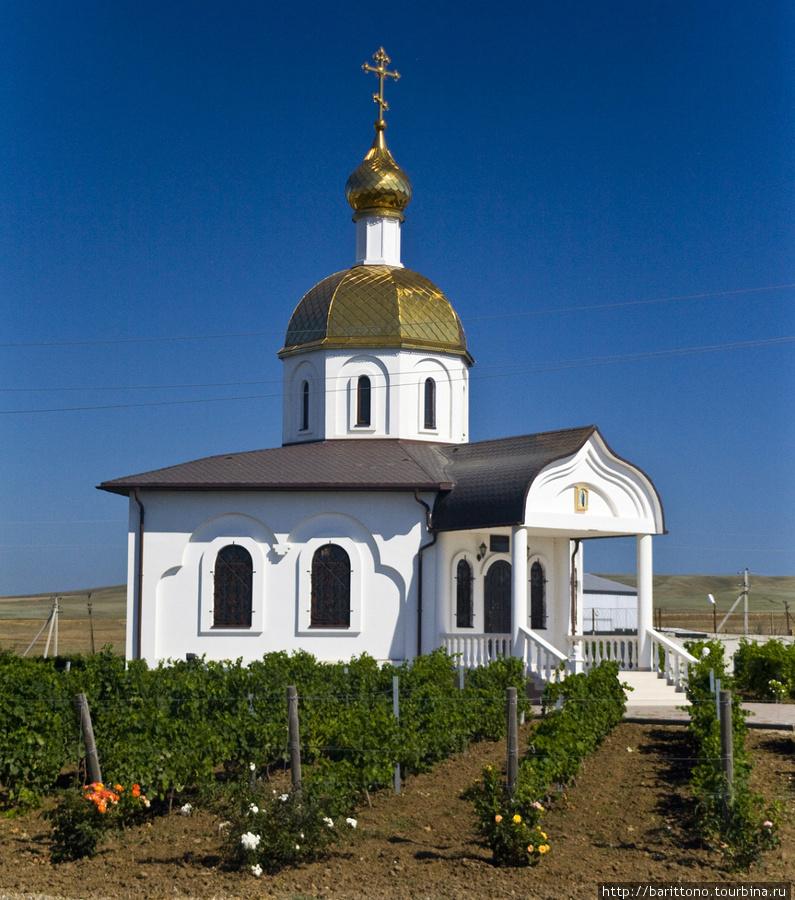 Виноград растёт везде.
