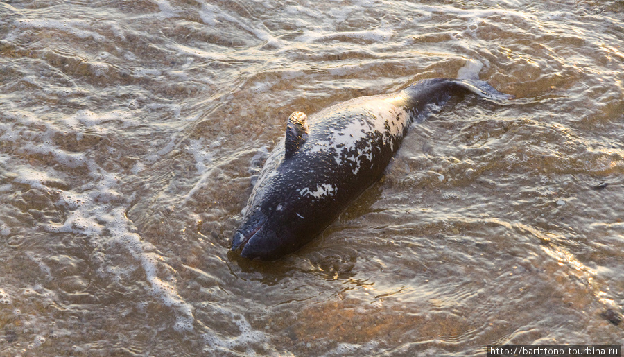 Я плохо разбираюсь в морских обитателях, но кажется это молодой мертвый дельфин?