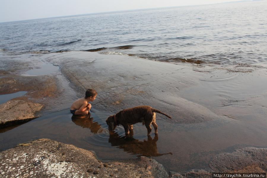 Дети и собаки гранитный пляж полюбили