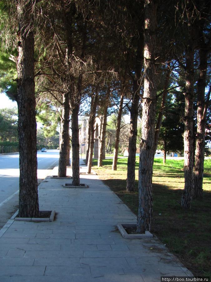 Так как Белек расположен в зоне национального парка, вырубка деревьев запрещена. Каждое дерево на учёте и имеет порядковый номер.