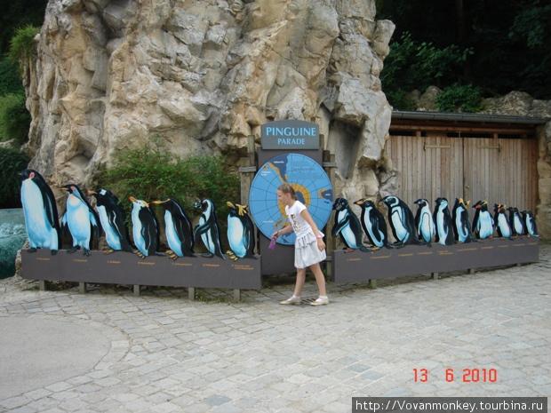 Пингины. Эволюция.
