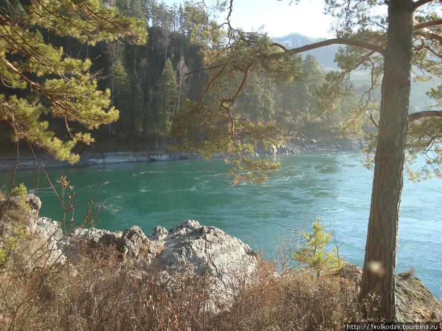 Вид из окон на реку Катунь