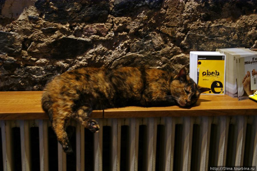 Кошка греется на батарее. Получилось даже погладить её, на что она ответила громким и довольным «Мяу!»