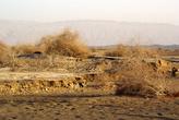 Пустынная растительность в Турфанской котловине