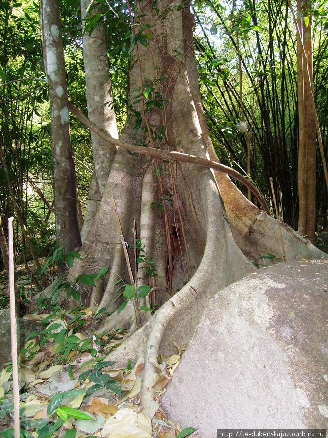 В тропическом дождевом лесу. Экскурсия
