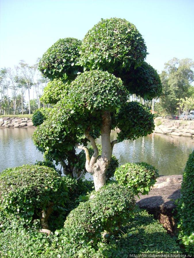 В тропическом саду Нонг Нуч.