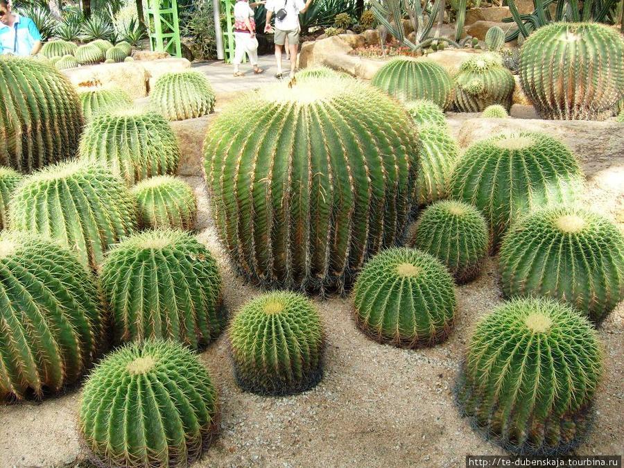 В отделе кактусов.