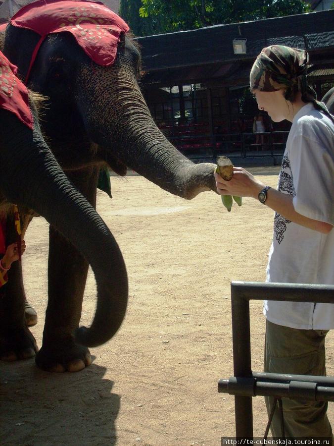 Кормление слоников.