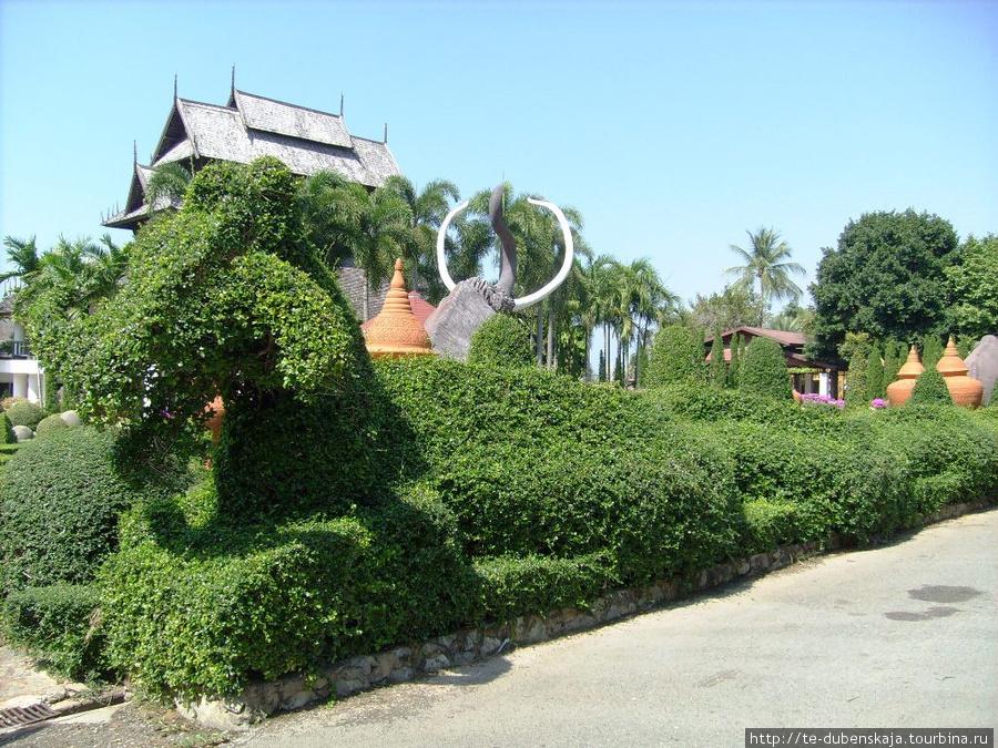 Зеленый дракон в тропическом саду.