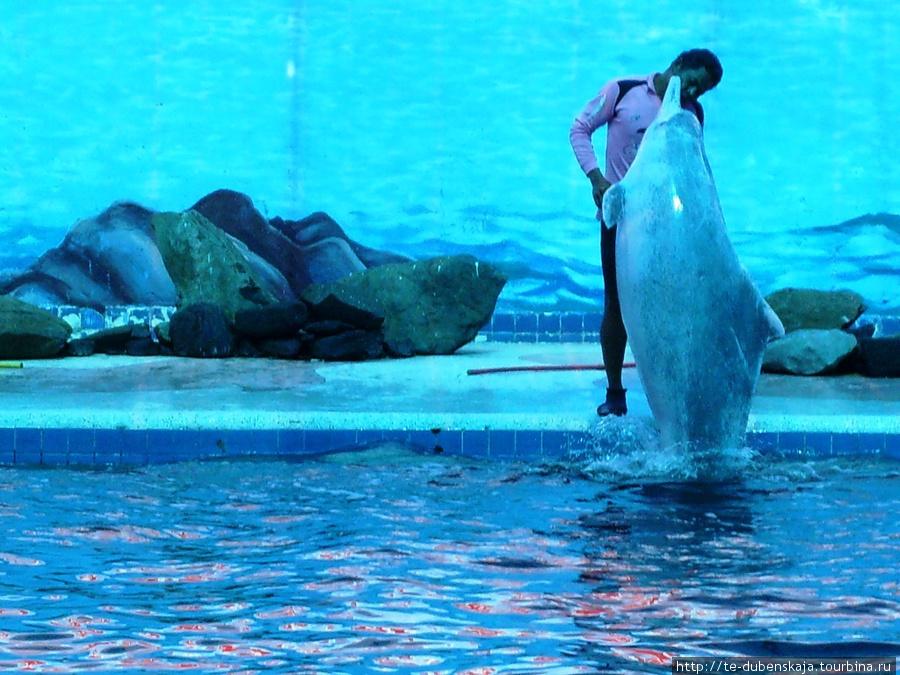 Выступление дельфинов.