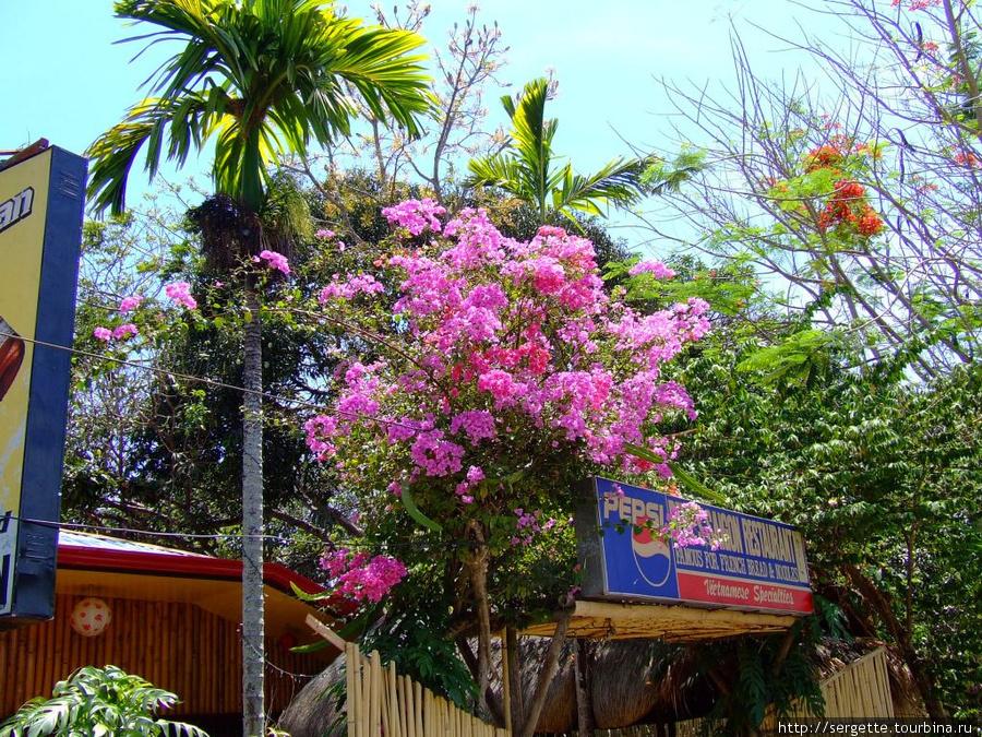 Цветы везде