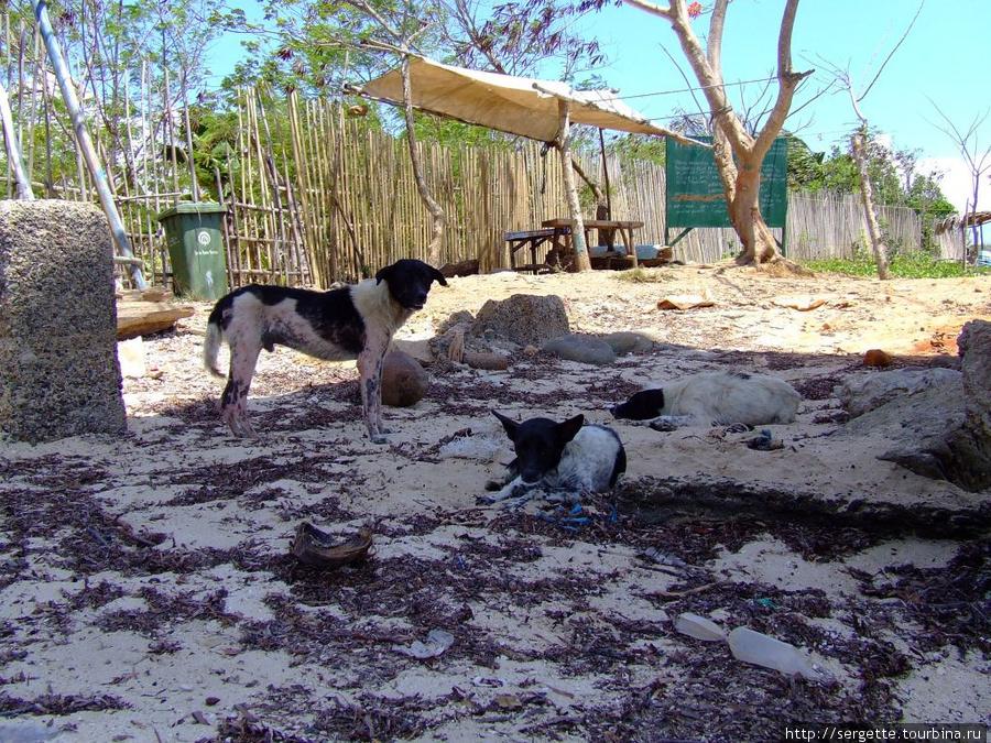 Соленые рыбацкие собаки