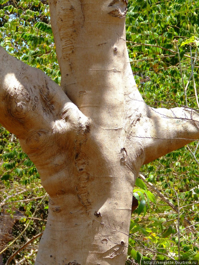 Ствол интересного дерева