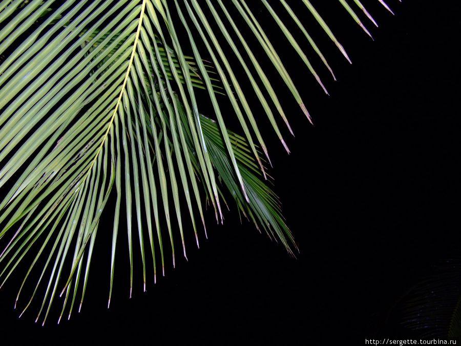 Ночь под кокосовой пальмой
