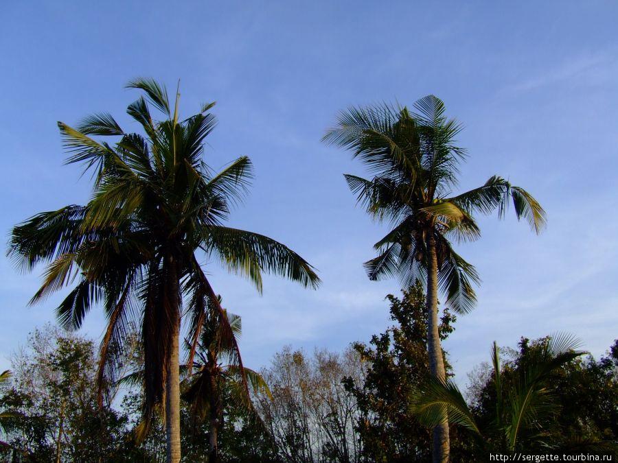 Кокосовая плантация