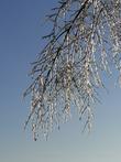 Ледяная ветка