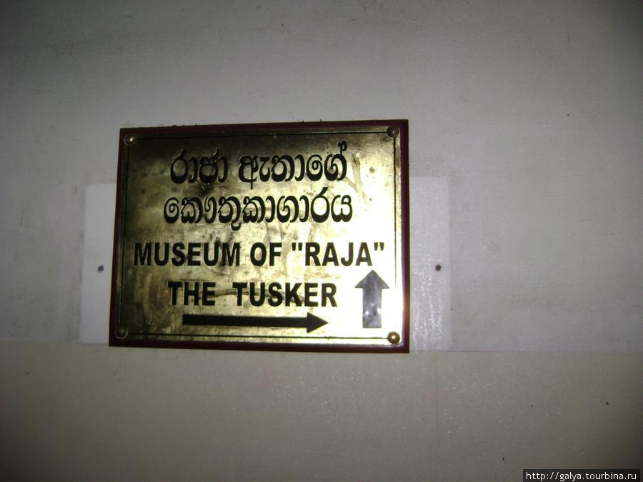 Музей храмового слона. Видите, его очень уважительно называют Раджой...