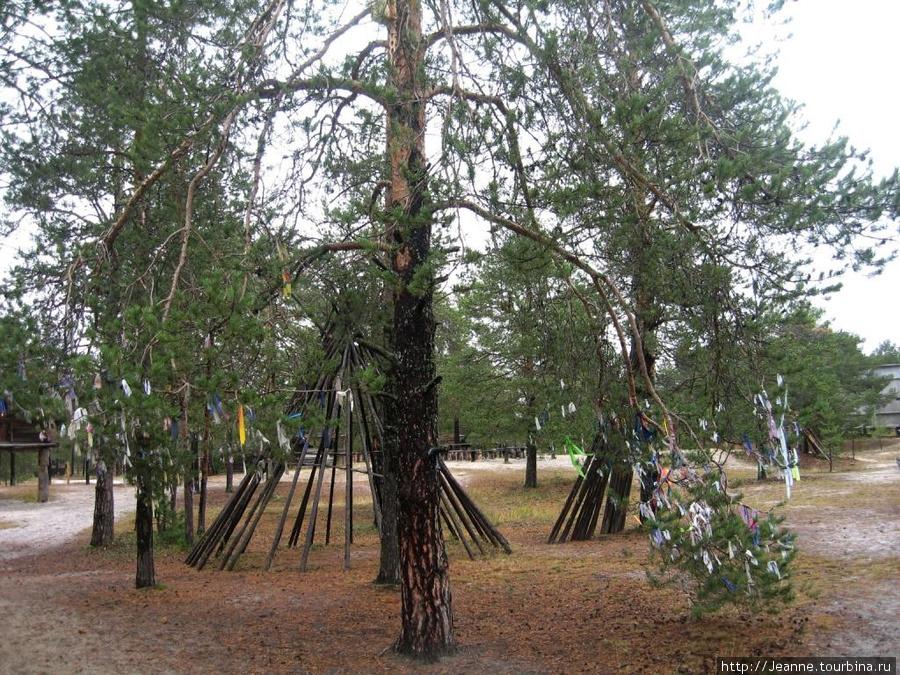 Лоскутки тряпочек на ветках дерева — обычай хантов