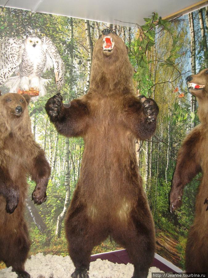 Перед этим медведем фотографировался актёр А.Абдулов, знаменитый персонаж сериала детектив Кулагин, путешественник журналист Синкевич, знаменитый журналист Дроздов — ведущий передачи