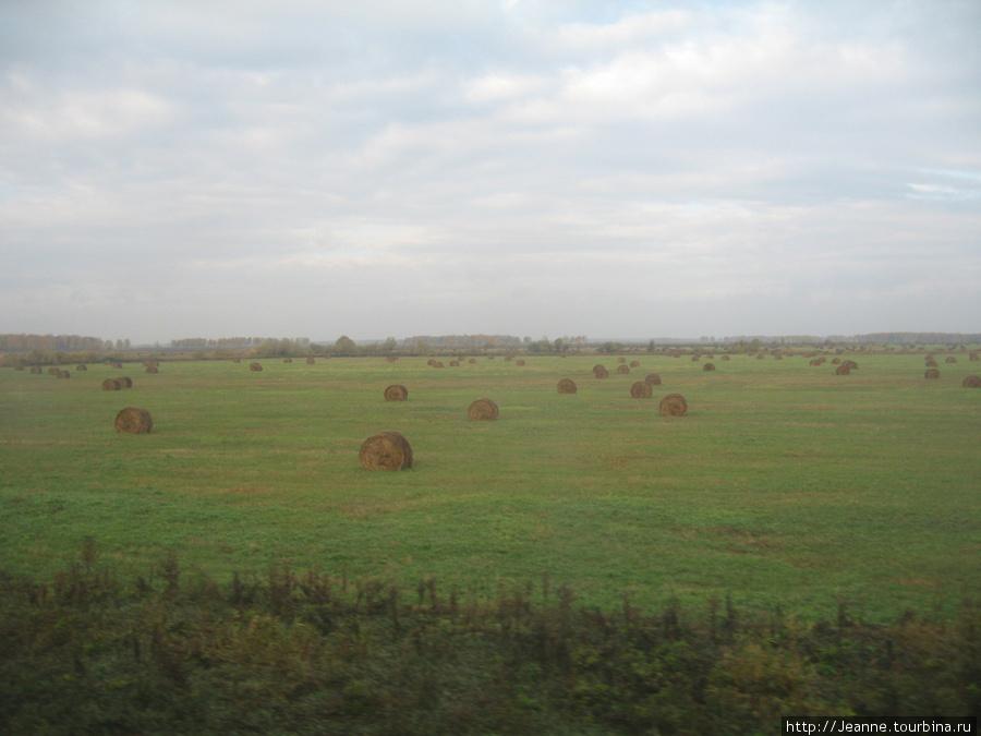 Поля Тюменской области