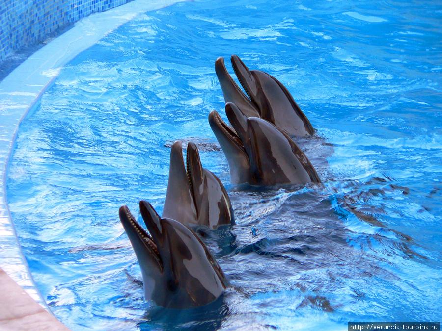 И дельфины в Дельфинарии