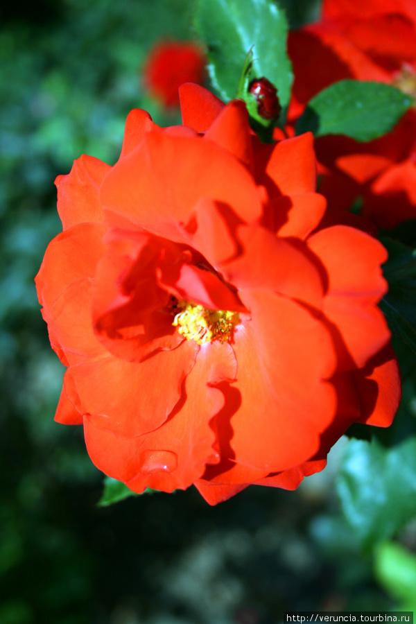 В начале сентября еще цве
