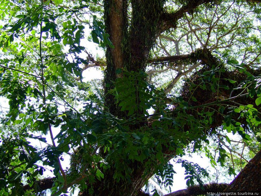 Поднял голову и увидел симбиоз разных растений