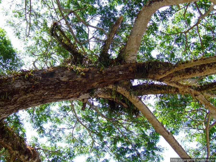 На дереве растут разные папоротники