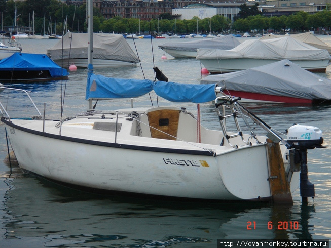 Так защищают лодки от голубей, на каждой яхте закреплена фигурка вороны, покачивается, как живая