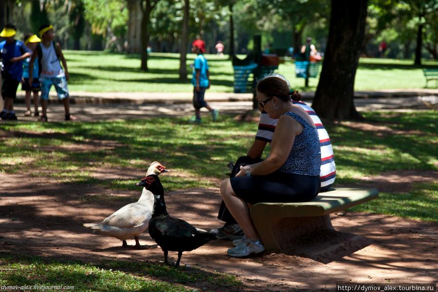Парк Ибирапуэра Сан-Паулу, Бразилия