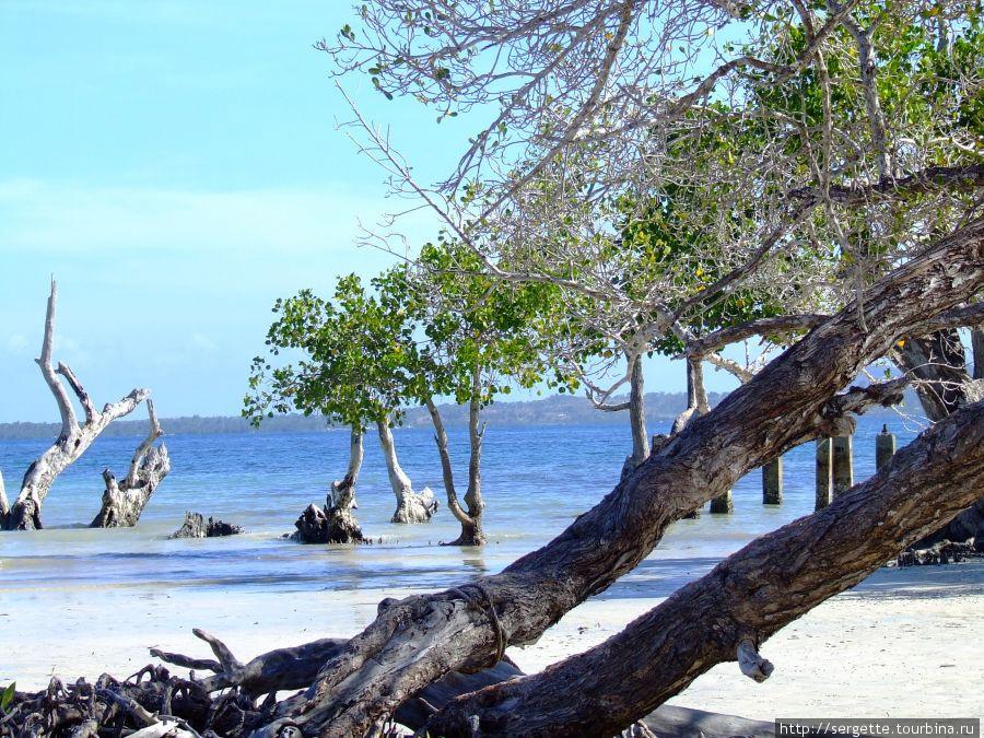 Prestine Beach
