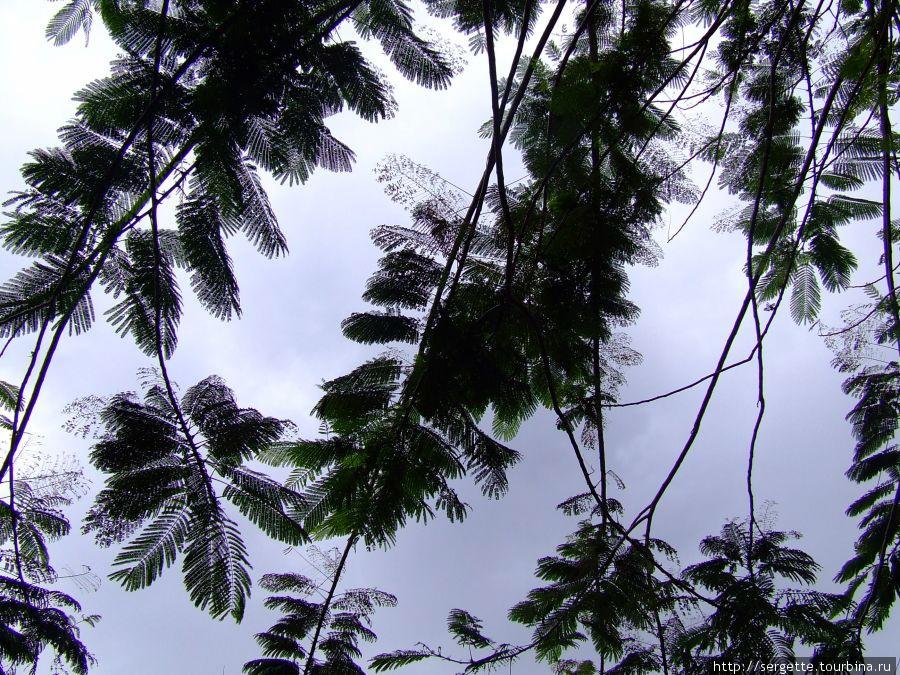 Изящные листья