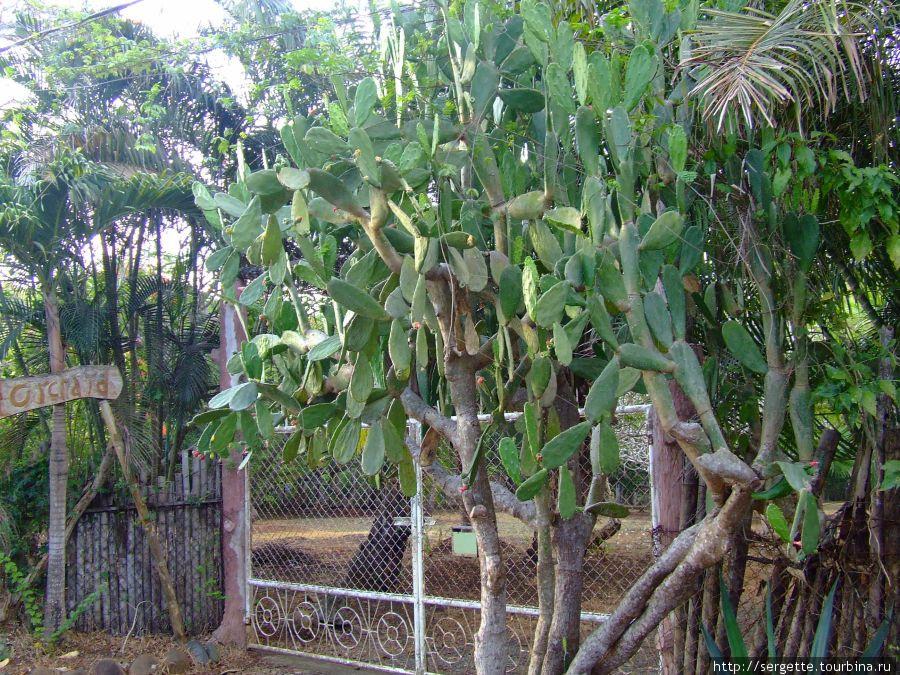 И даже кактусы